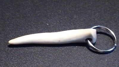 Handmade Key Chain with a Deer Antler Tip on a Silver Ring c2