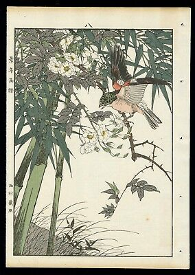 1892 Orig JAPANESE WOODBLOCK PRINT KEINEN Bird & Flower - Brambling