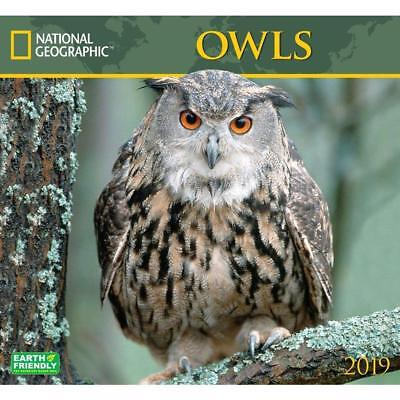 Owls - National Geographic - 2019 Wall Calendar - Brand New - 182743
