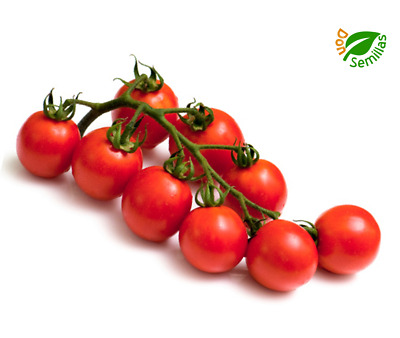 Tomate Cherry Cerise Red ( 200 semillas ) seeds - tomato rojo