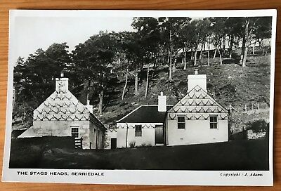 Berriedale, Caithness, Highland - Stags Head - RP postcard by Adams c.1960s