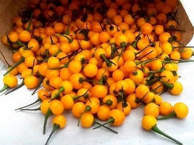 10 Graines de piment  Aji Charapita, Peruvian Chili Pepper Seeds