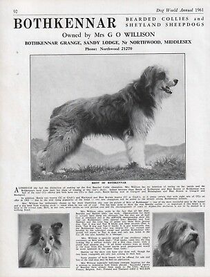 Bearded Collie Dog World 1961 Breed Kennel Advert Print Page Bothkennar Kennel