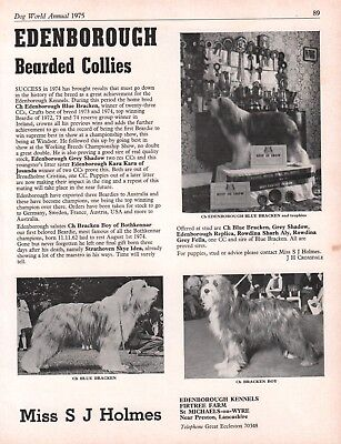Bearded Collie Dog World 1975 Breed Kennel Advert Print Page Edenborough Kennel