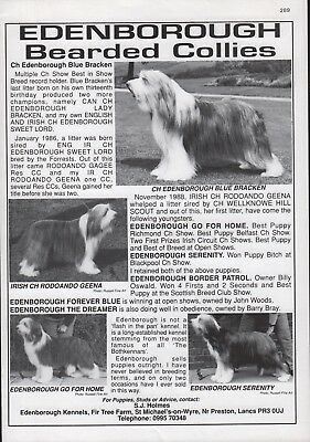 BEARDED COLLIE DOG WORLD 1980s BREED KENNEL ADVERT PRINT PAGE EDENBOROUGH KENNEL