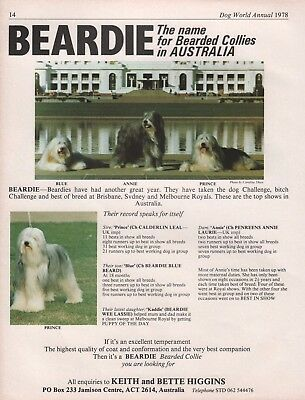 Bearded Collie Dog World 1978 Breed Kennel Advert Print Page Beardie Kennel