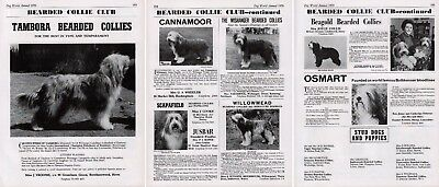 Bearded Collie Club Dog Kennel Advert Pages Dog World 1970 Various Kennels