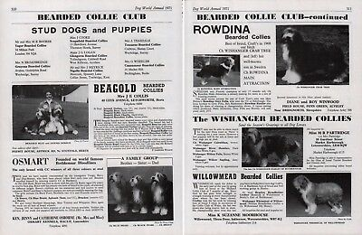 Bearded Collie Club Dog Kennel Advert Pages Dog World 1971 Various Kennels