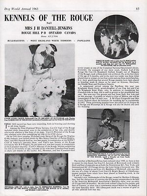 """Bullmastiff Dog Breed Kennel Advert Print Page """"Of The Rouge"""" Dog World 1963"""