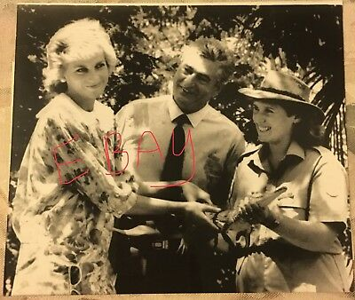 Press Photo Princess Diana Lady Di Touches Croc Australia 3•28•88 RARE