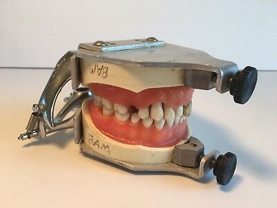 Dental Dentist's Teeth Study Model Typodont Teeth