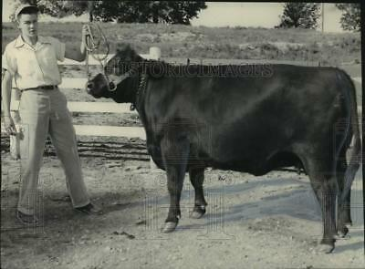 1952 Press Photo Billy Maples & his champion Angus cow in Alabama - abna44669