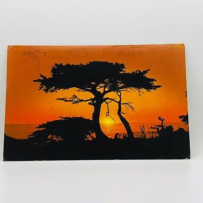 Postcard 1985 California Coast Monterey Peninsula Cypress Trees at Sunset B-36i