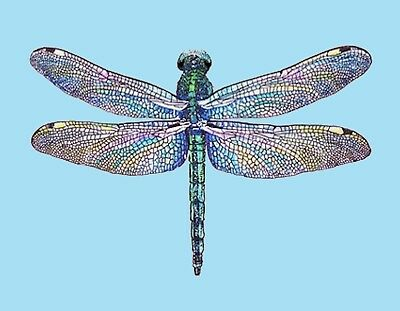 METAL MAGNET Stained Glass Look Dragonfly Turquoise Background Insect MAGNET