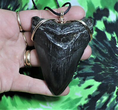 Nice 3 5/16'' Megalodon Sharks Tooth Necklace Jewelry No Repairs Fossils