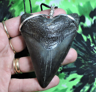 Beautiful! 3 1/2'' Megalodon Sharks Tooth Necklace Jewelry  No Repairs Fossils