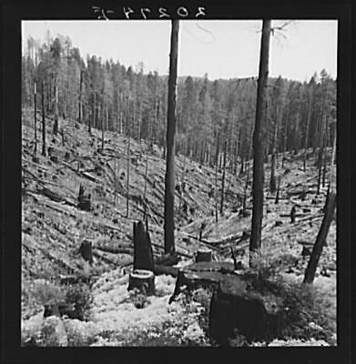 Logged over land along U.S. 99,Southern Oregon,OR,Farm Security Administration