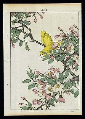 1892 Orig JAPANESE WOODBLOCK PRINT KEINEN KACHO GAFU Bird & Flower -  Canary