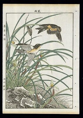 1892 Orig JAPANESE WOODBLOCK PRINT KEINEN KACHO GAFU Bird & Flower - Swallow