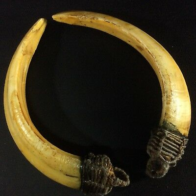 Real 2 BOAR Pigs Teeth Solid Swine Beast Thai Amulet Power Wild Pig Tooth
