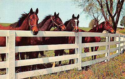 Postcard - Horses Corral White Fence - Vintage Unused A09