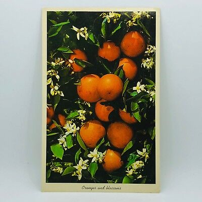 Postcard from 1963 Tropical Florida FL Oranges and Blossoms C-22m