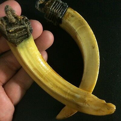 Real Solid 2 Boar Strong Wild Pig Teeth Swine Beast Thai Amulet Power Pork Tooth