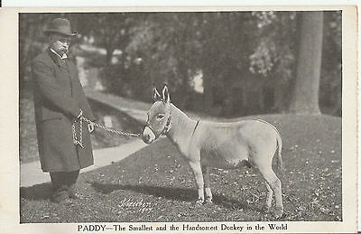Paddy - The Smallest Donkey In The World - Vintage 1907 Horse Postcard