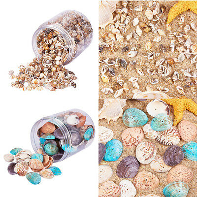 Natural Shells 2 Box -Sea Shells for DIY Jewellery Craft Conch Wedding Favor