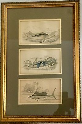 Vintage Antique Framed Fish Sketches Zoological Rare Collectible Academic