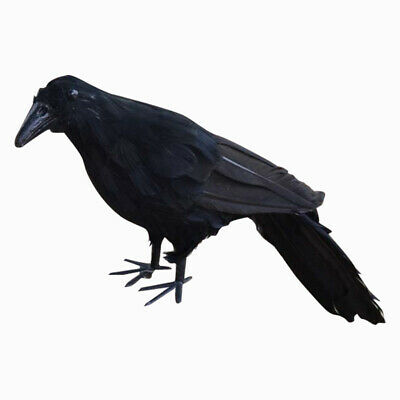 Realistic New Black Raven Feathered Crow Halloween Fancy Dress Prop Accesso D3J9
