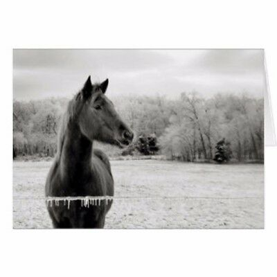 Black & White Winter Horse Holiday Christmas Greeting Card 5x7