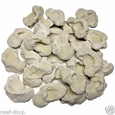 25 Cured Reef Rock Frag Plugs Live Coral Propagation Free USA Shipping