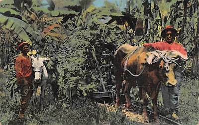 COSTA RICA ~ WORKERS WITH OX HAULING BANANAS TO THE RAILROAD ~ used 1941