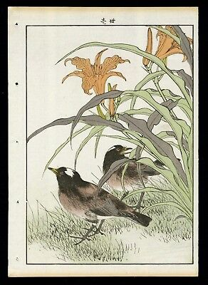 1892 Orig JAPANESE WOODBLOCK PRINT IMAO KEINEN Bird & Flower - Starlings