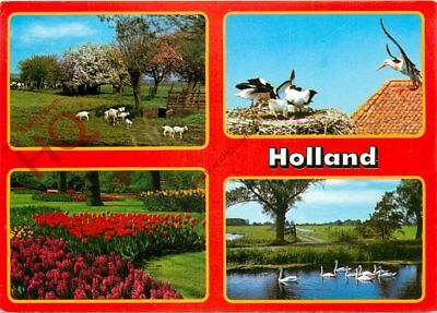Picture Postcard::Holland (Multiview) Showing The Flowers, Keukenhof