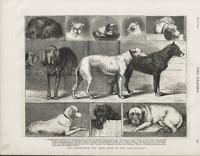 OLD ANTIQUE 1874 PRINT PRIZE WINNING DOGS AT THE BIRMINGHAM DOG SHOW b138