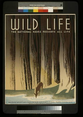 Wild Life,The National Parks Preserve All Life,Deer drinking from stream,forest