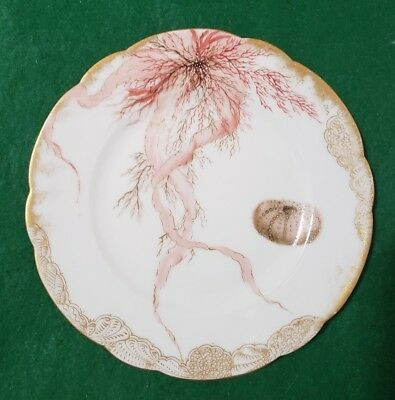 """Antique Limoges Handpainted Plate - Sea Urchin Shell & Seaweed - 8 1/2"""""""