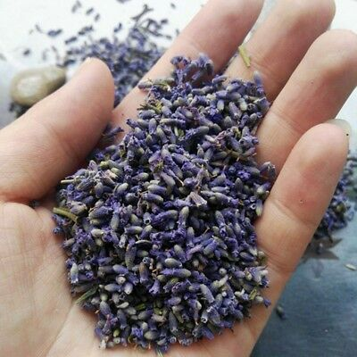50g Dried Lavender Strong Fragrance Highly Aromatic Scented Fresh Lavender