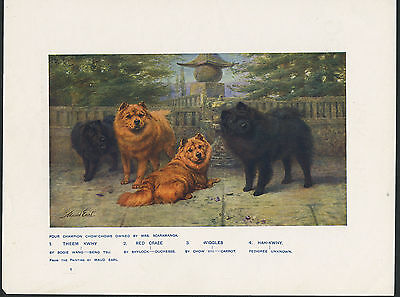 Chow Chow Named Dogs Antique Dog Art Print From 1907 By Maud Earl