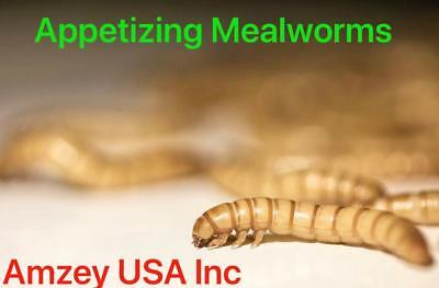 500,1000, 2000, 3000, 5000, 10000 Organically Live Mealworms   Free Shipping!