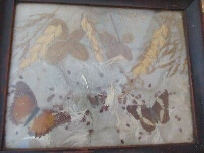 Victorian antique tray with butterflies under glass. .