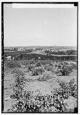 Zionist colonies on Sharon,Ramat Gan,North of Tel-Aviv,Israel,Middle East