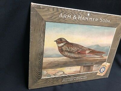 Large Arm and Hammer Baking Soda Nighthawk Bird Card Store Sign M.E. Eaton