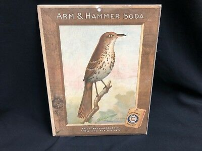 Large Arm and Hammer Baking Soda Brown Thrasher Bird Card Store Sign M.E. Eaton