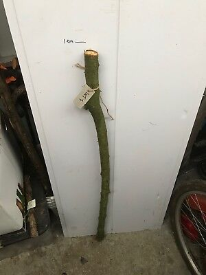 BLACKTHORN WALKING STICK Shank Lot 7