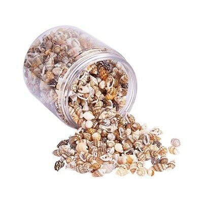 About 1300-1500 Tiny Sea Shell Ocean Beach Spiral Seashells Craft Charms 7-12 W2