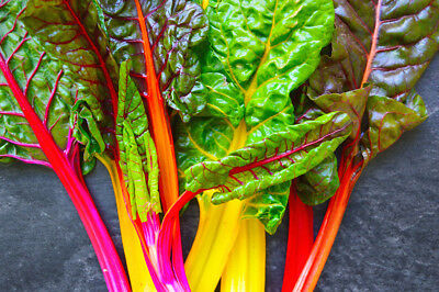 150 Graines de Poirée, Beta vulgaris,  Swiss Chard Rainbow Mix vegetable seeds