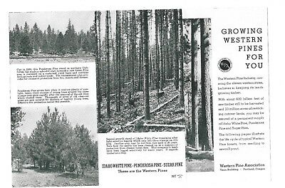 1939-40 Ggie Booklet Growing Western Pines For You